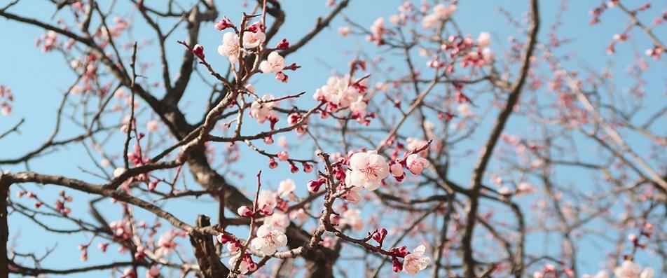 Lunedì 30 aprile gli uffici di CNA Formazione rimarranno chiusi
